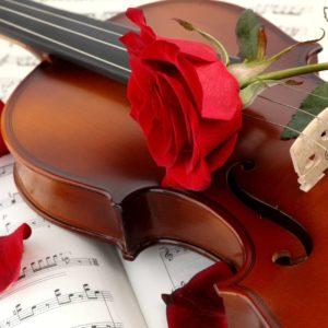 Fototapet Trandafir 19 Vioara Partituri