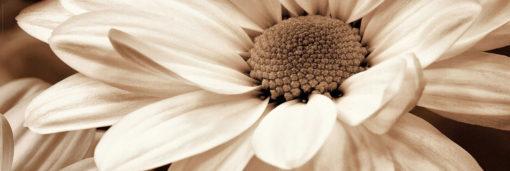Tablou Canvas Floare 57 x 150 cm