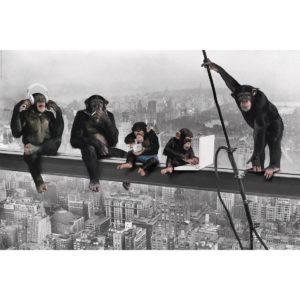 Maxi Poster Cimpanzei pe Grinda