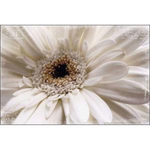 Maxi Poster Floare Alba