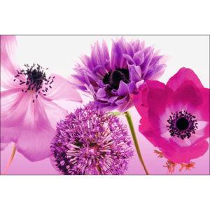 Maxi Poster Violet de vara