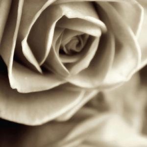 Fototapet Trandafiri FTV-1508