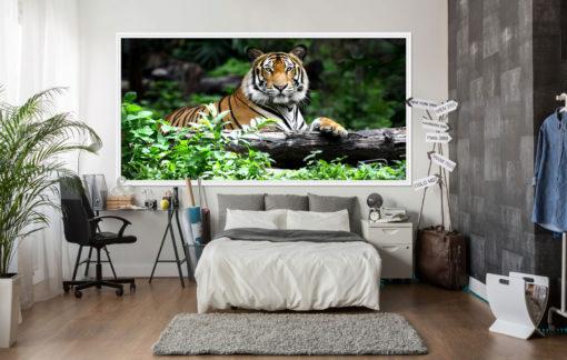 Fototapet Tigru 22