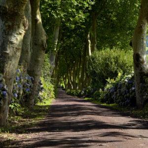 Drum Impadurit - Regiunea Azores