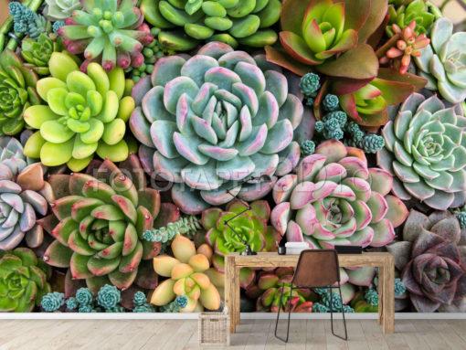 Planton cactus multicolor