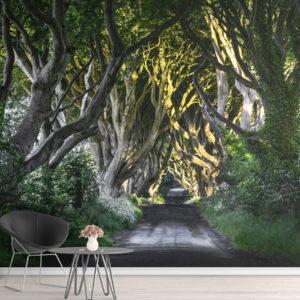 Fototapet Dark Hedges - Drumul prin pădurea de fagi