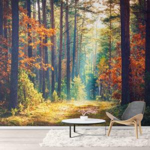 Fototapet Toamna în Pădure