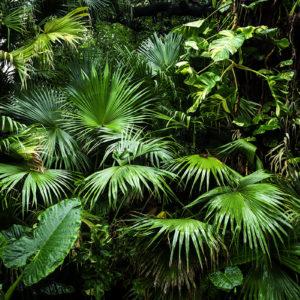 Fototapet Plante Ramuri Tropicale